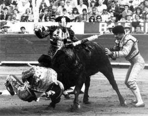 Jorge y toro