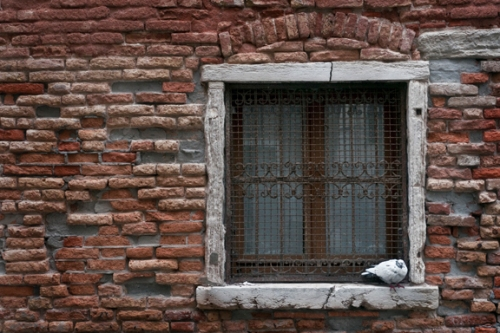 Pigeon and window 1310810 FB