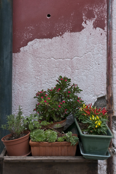 Potted plants 1310900 FB