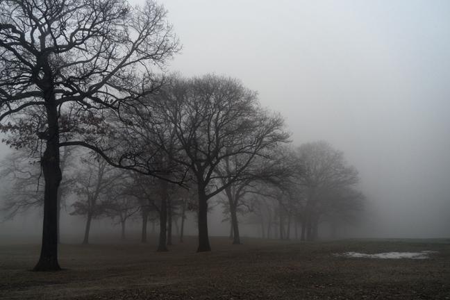 Fog 1000507 BLOG