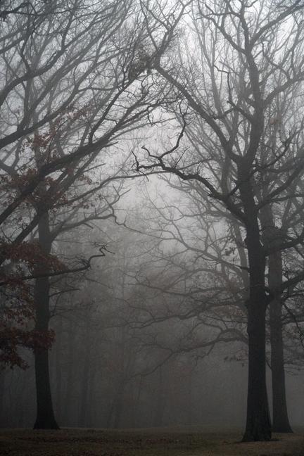 Fog 1000512 BLOG