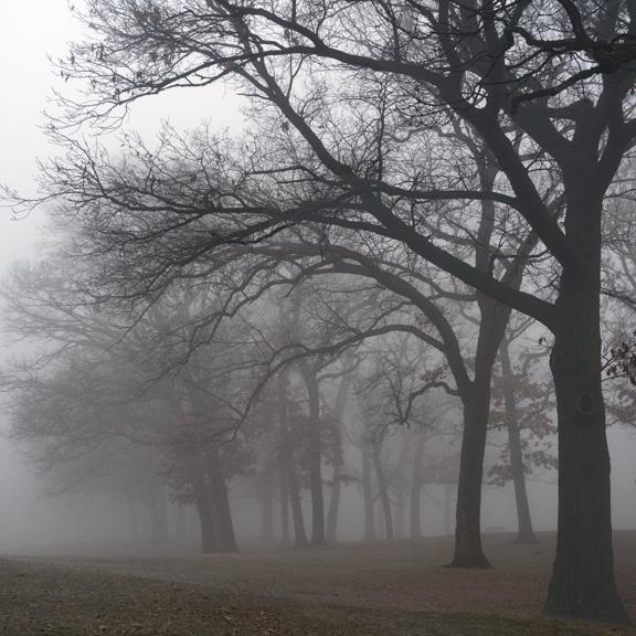Fog 1000523 BLOG