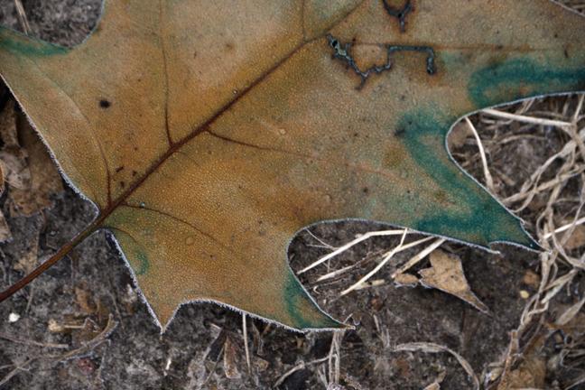 Fog leaf 1000605 BLOG