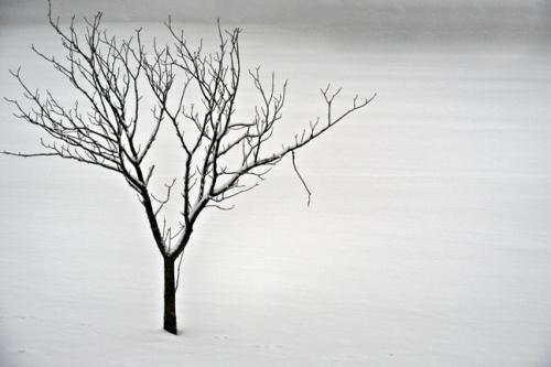 Tree 1000792 BLOG