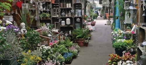 Questar Marche aux fleurs BLOG