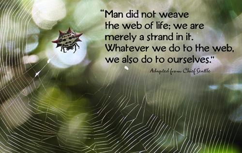 Web of life FB