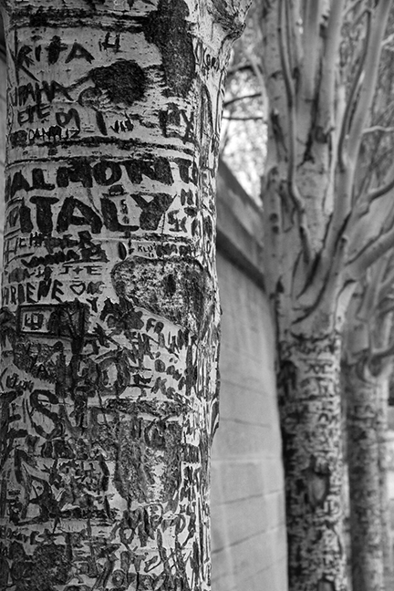 Seine trees 1130330 BW BLOG
