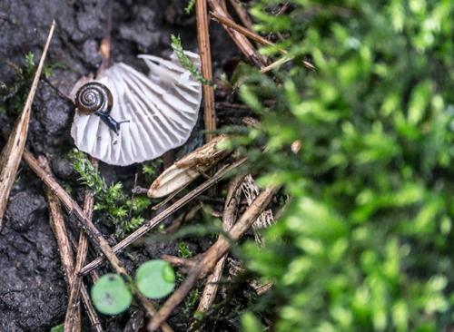 Tiny snail 1080489 FB