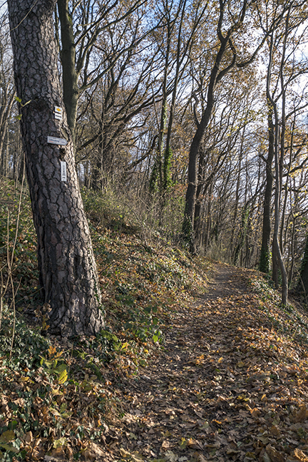 Freiburg path rustic 1040216 BLOG