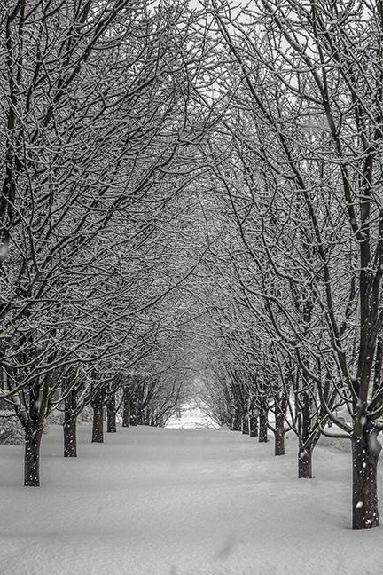 Winter World 1100173 BLOG