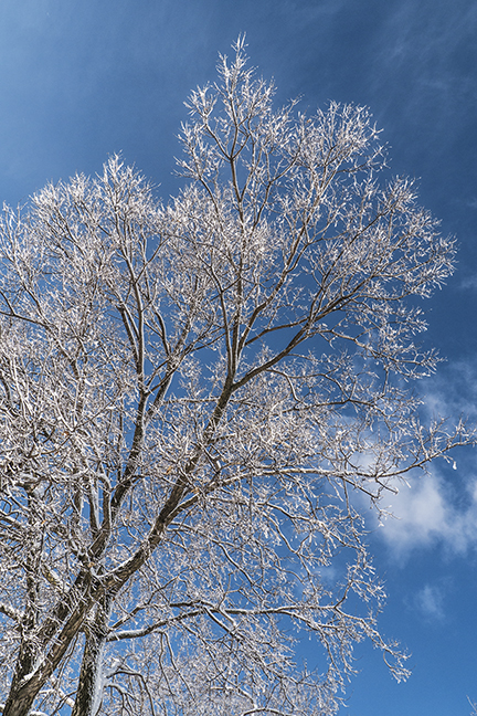 Winter World 1100219 BLOG