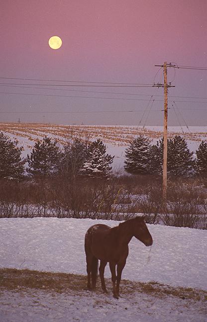 horse2 BLOG