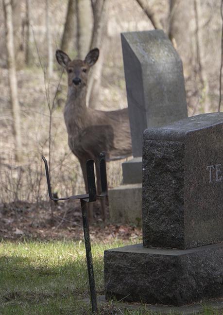 Deer ornament 1100913 BLOG