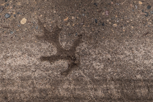 Leaf in road 1100890 BLOG
