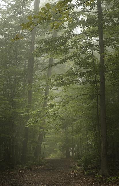 Chautauqua Forest 1160052 BLOG