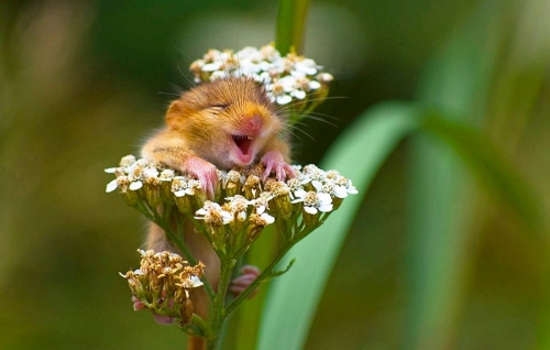 Mouse International day of Happiness BLOG