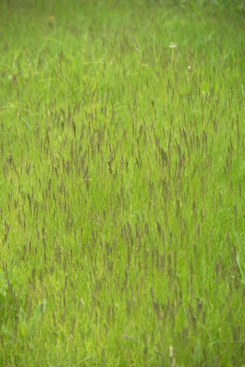 Frontenac prairie 1320089 BLOG