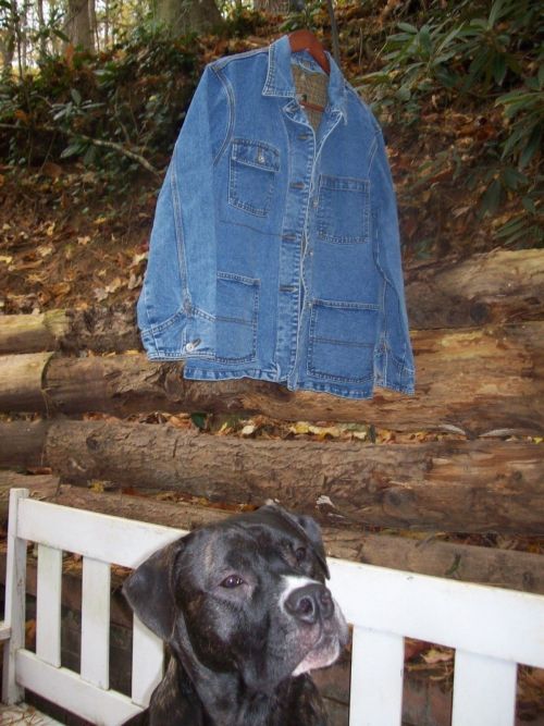 eBay jean jacket and dog BLOG