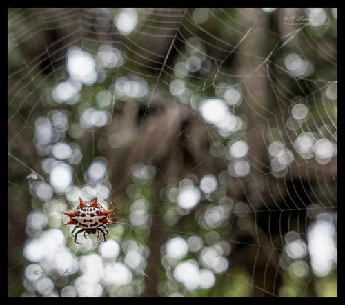 Amored spider 1290273 CR CR BLOG