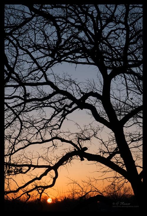 Sunrise 1290232 BLOG