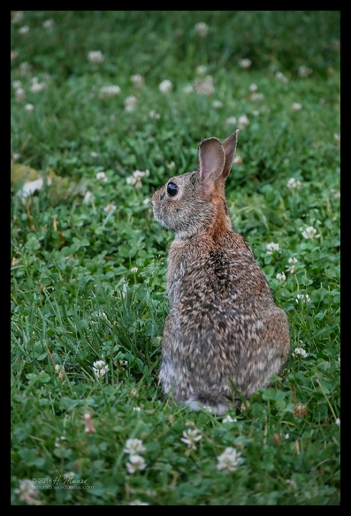 Bunny 1000510 BLOG