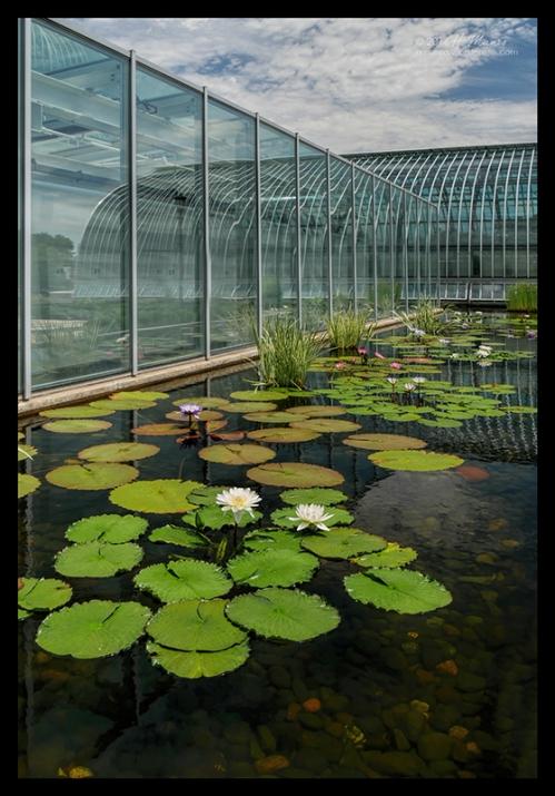 Como Conservatory 1000317 BLOG