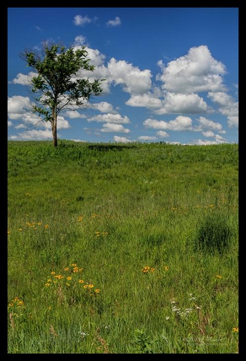 Jackson Meadow 1000138 CL BLOG