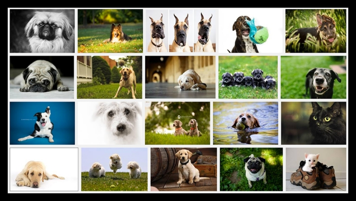 Google pet photography BLOG