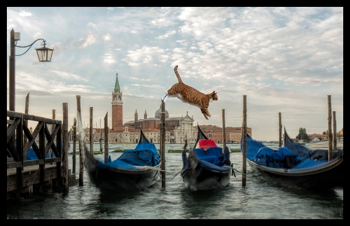 Rocky Venice Gondoli 1560088 BLOG