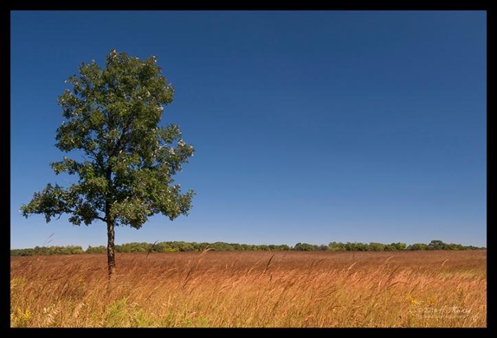 Prairie 1040259 BLOG