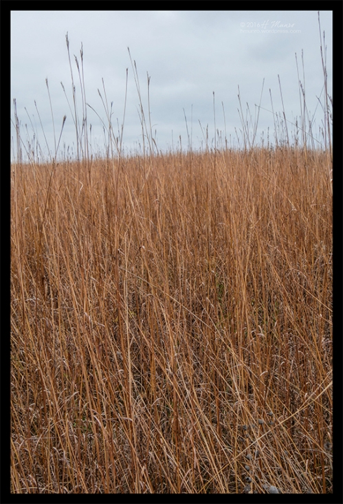 Frontenac prairie 1010340 BLOG
