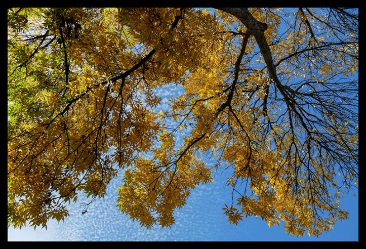 ash-tree-1010138-blog