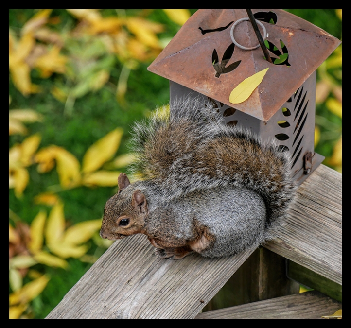 squirrel-1010114-blog