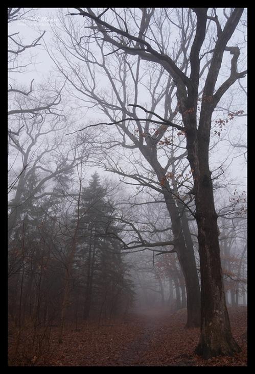 Fog 1060828 BLOG