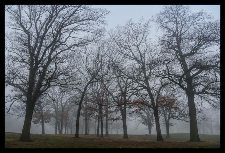 Fog three 1060858 CL BLOG