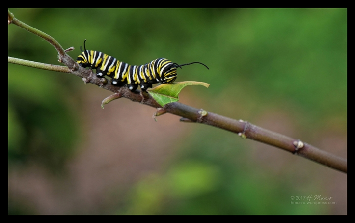 Caterpillar 1030560 CL BLOG