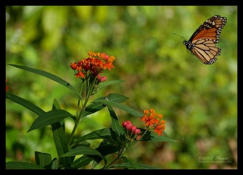 Monarch 1030572 BLOG
