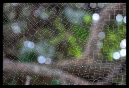 Orb weaver 1030490 BLOG