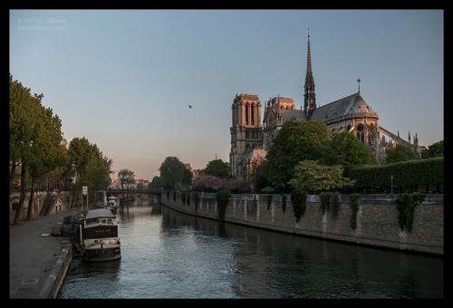 Notre Dame sunrise 1130041 BLOG