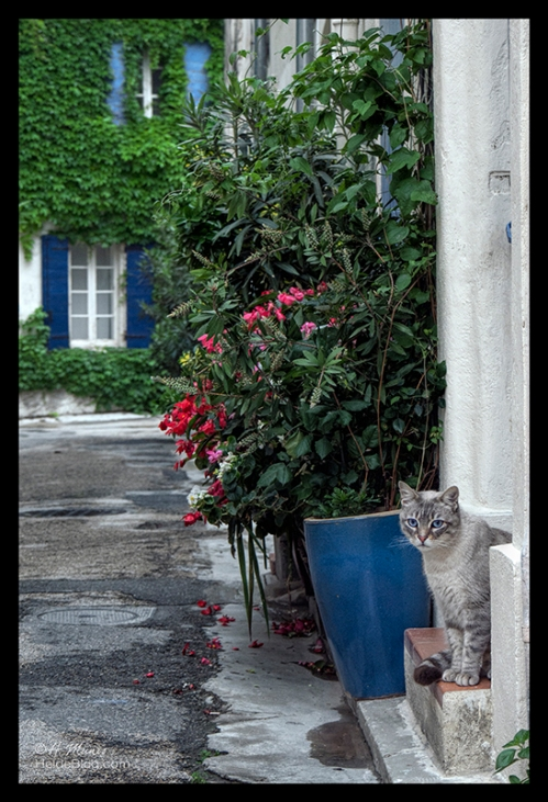 Arles street view with cat 1710616 CR2 BLOG
