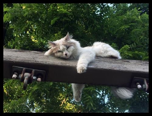 Dozing cat IMG_6077 BLOG