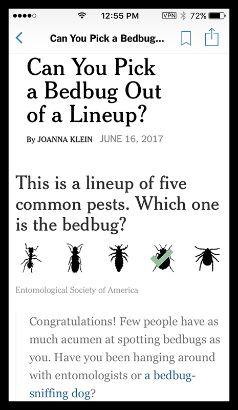 Spot a bedbug IMG_5985 BLOG