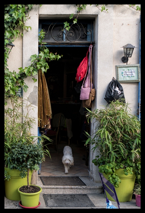 Doorway with dog 1690791 BLOG