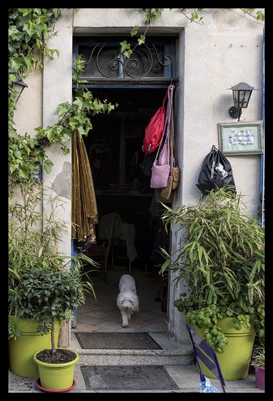 Doorway with dog 1690791 BLOG