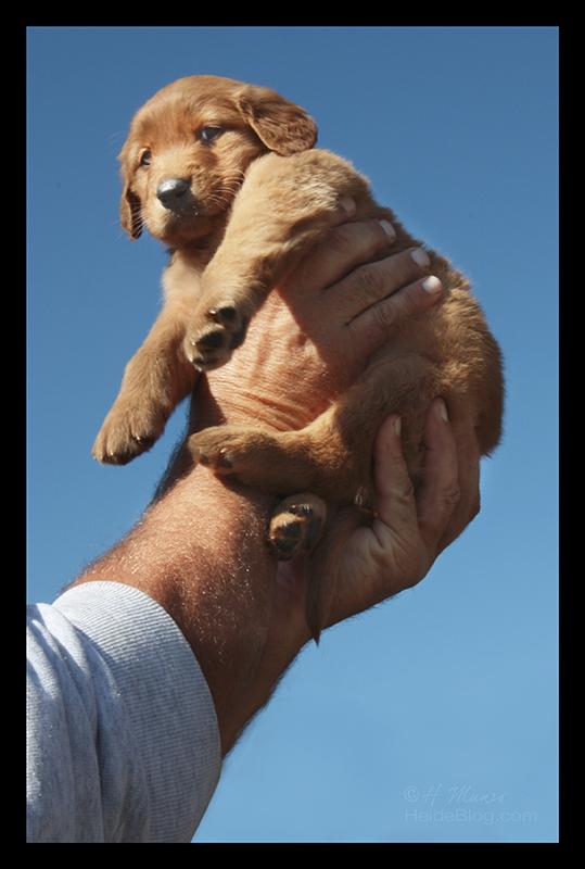 Puppy 5 BLOG