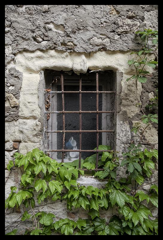 Window 1700975 BLOG