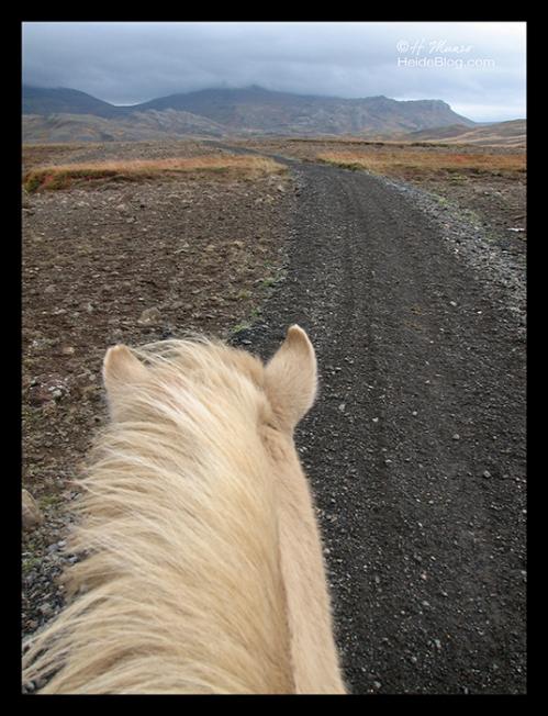 Iceland ponyhead landscape BLOG