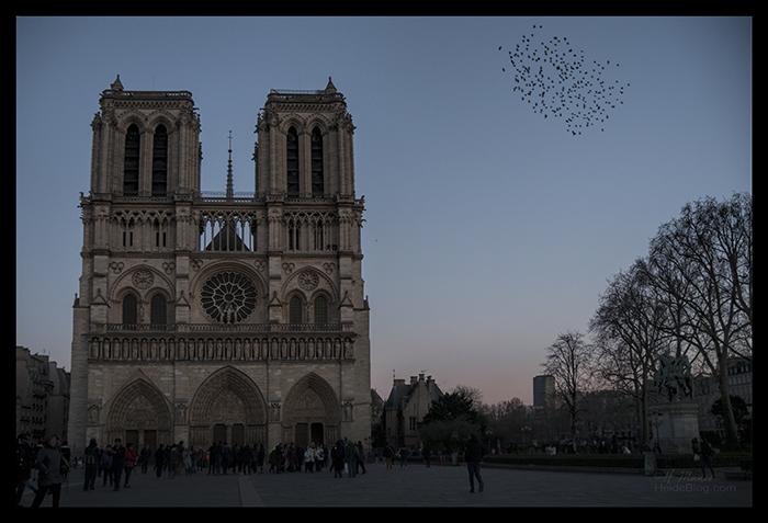 Notre Dame murmuration 1190129 CX CL BLOG