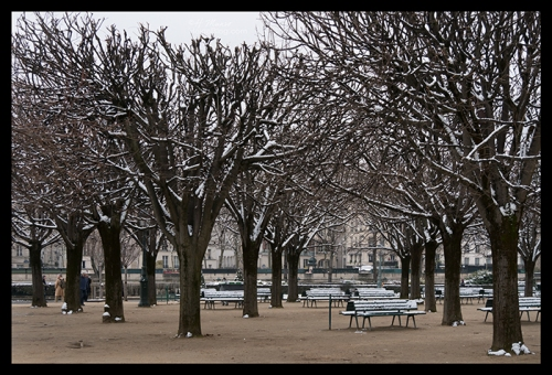 Plane trees 1180749 BLOG