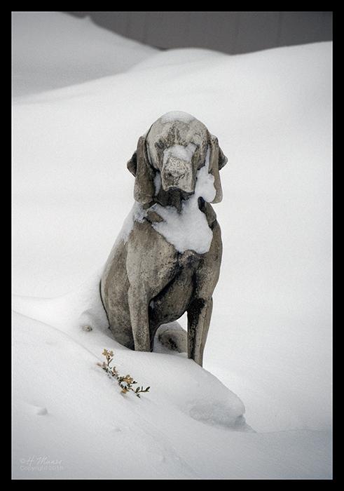 Blizzard 2018 dog two 1830034 BLOG
